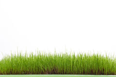 Wet grass isolated on white background Stock Photo