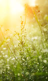 The wet grass is lit with the sun. Stock Photos