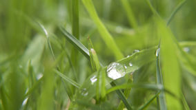 Wet grass macro. Wet droplets of water on grass, drying in the sun Royalty Free Stock Photos