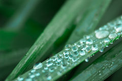 Wet grass. Macro of wet grass on a field Royalty Free Stock Photos