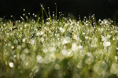 Wet grass in the morning Royalty Free Stock Photo