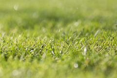 Wet grass after the rain Royalty Free Stock Photography