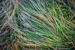 Wet grass after rain Stock Images