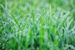 Wet Grass After Rain. A close up shot of some wet grass after rain Royalty Free Stock Images