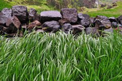 Wet grass and rocks. In the mountains Royalty Free Stock Photo