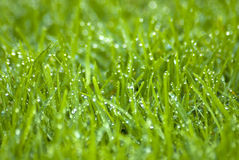 Wet grass shimmering Stock Images