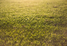 Wet grass in sunlight Royalty Free Stock Image