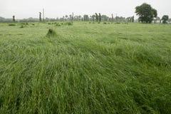 Wet grass Stock Photos