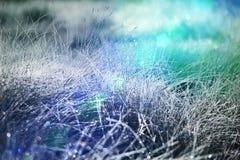 Wet grassland Stock Image