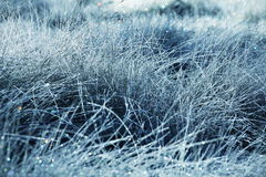 Wet grassland Stock Images