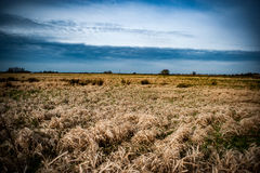 Wet grassland Stock Photography