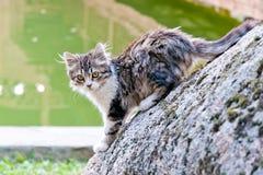 Free Wet Gray Kitty Stock Photo - 53282400
