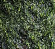 Wet green algae Royalty Free Stock Images