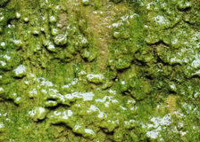 Wet green Algae Texture Background. Closeup of wet green algae growing on wall Texture Background stock images