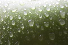 Wet green apple. With multy drops macro Stock Images