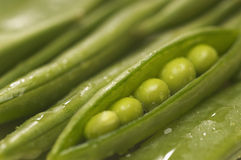 Wet Green Bean's Pod Stock Images
