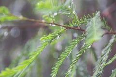 Wet green blurred plants Stock Photos