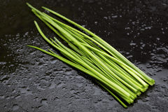 Wet green chives Stock Images