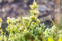 Flora. Wet green flora on Hawaii island Royalty Free Stock Photography