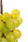 Wet green grape macro Royalty Free Stock Photo