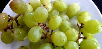 Wet green grapes on a white plate. Wet green grapes white plate diet vitamins snal snack stock photo