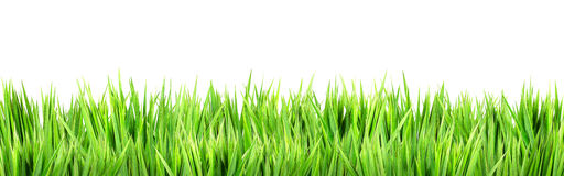 Wet green grass. Isolated on white background Stock Images