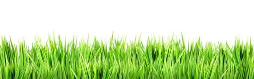Wet green grass Stock Images