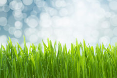Wet green grass Royalty Free Stock Photos