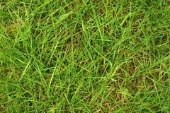 Wet green grass. Shot from above, morning dew wet green gras Stock Photo
