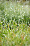 Wet Grass Bokeh with drops Stock Photography