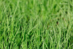 Wet green grass Stock Photos