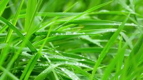 Wet green grass stock video footage