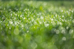 Wet green grass with dew lawn backround Stock Photography