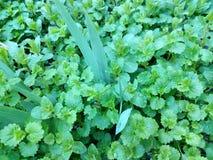 Wet green grass in drops of rain Stock Photo