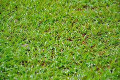 Wet green grass Stock Photo