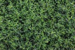 Wet green grass. Wet green fresh grass in garden royalty free stock photography