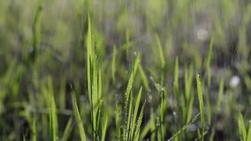 Wet green grass in the rain moving with wind in the forest. stock video footage