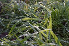 Wet green grass in the sunshine.  stock images