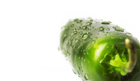 Wet Green jalapeno hot pepper. On white background Stock Photography