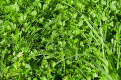 Wet green lawn grass close up Stock Images
