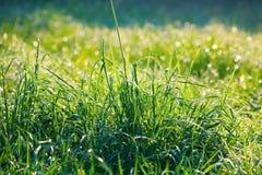 Wet green lawn after rain Stock Photos