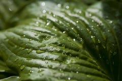 Wet green leaf. Macro of wet green leaf Stock Photos