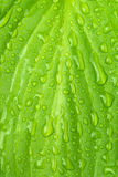 Wet green leaf Stock Photo