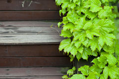 Wet green leaf along the wood stair Royalty Free Stock Photo