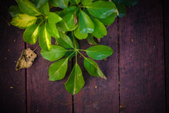 Wet green leaf along the wood stair. S Royalty Free Stock Images