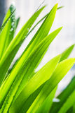 Wet green leaf Stock Images