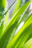 Wet green leaf. Background with light and water drops Stock Images
