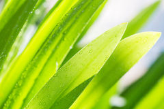 Wet green leaf Stock Photos