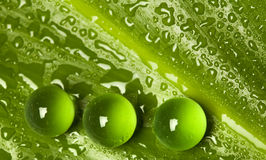 Wet green leaf pattern with marbles Stock Photo