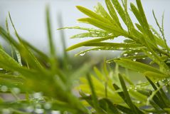 Wet green leaves Royalty Free Stock Photos